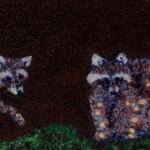 вышивка еноты на прогулке