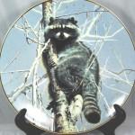 сувенирная тарелка енот на дереве