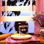фото енот на кухне