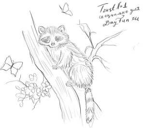Как-нарисовать-енота-карандашом-поэтапно-4