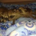 Полоскунята - малыши