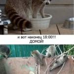 """День енота.. . Музей енотов """"Дом Енота"""" www.dom-enota.ru"""