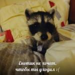 """. Музей енотов """"Дом Енота"""" www.dom-enota.ru"""
