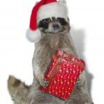 1120182_christmas_raccoon