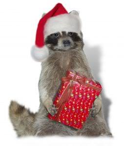 1120182_christmas_raccoon