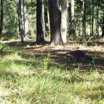 raccoon bethany release 4