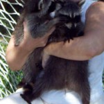 raccoons spunky and kate 2