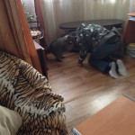 В Доме Енота гости