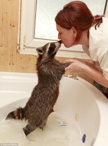 енот моется в ванной