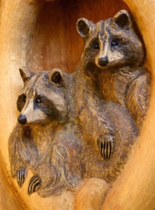 2_raccoon_hole_up