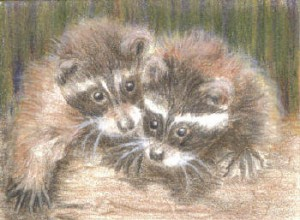 baby raccoonsСьюзен Смит