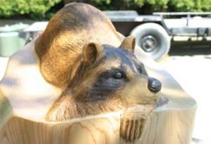 bclt_raccoon_soak