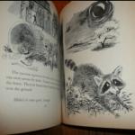 книги о енотах