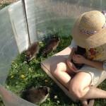 щенки енота, купить енота, купить енота полоскуна, малыши еноты, еноты в Москве, енот - полоскун