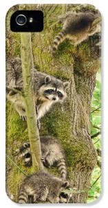 2-raccoon-family-jennie-marie-schell