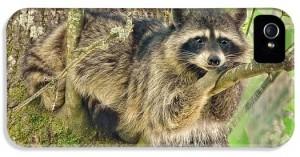 lazy-day-raccoon-jennie-marie-schell