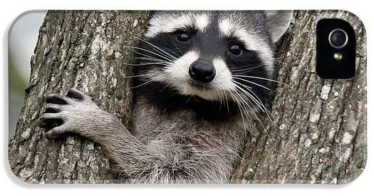 little-bandit-lynne-mcclure