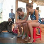 Енот, енот полоскун, погладить енота, енот дома, покормить енота, потрогать енота, ручной енот, енот и вода, игра с водой