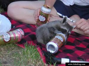 Пьяный енот