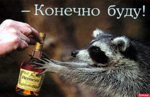 Енот алкоголик